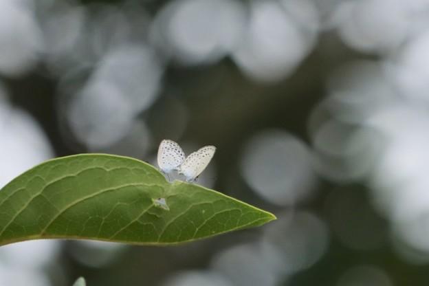 Photos: 蝶々結び~♪