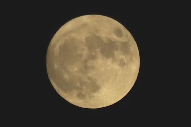 Photos: 中秋の名月~濃い黄色~♪