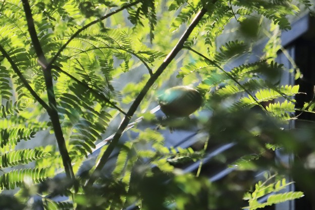 緑色のゴースト~♪