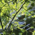 Photos: 緑色のゴースト~♪