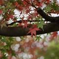 Photos: 赤と緑~♪