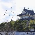 お城とハト~♪