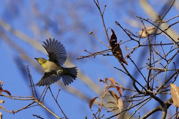 今日のかっこいい鳥さん~♪