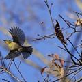 Photos: 今日のかっこいい鳥さん~♪