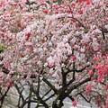 写真: 花祭り