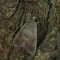 クロテンキリガ 190212z_5639