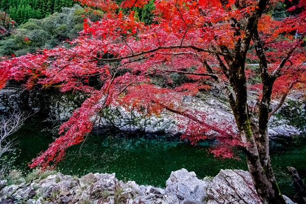 古座川渓流の秋
