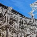 写真: 曽爾高原の秋-1