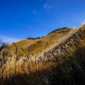 写真: 曽爾高原の秋-2