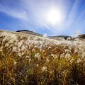 写真: 曽爾高原の秋-3