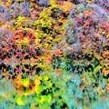 Photos: 徳山湖に写る紅葉