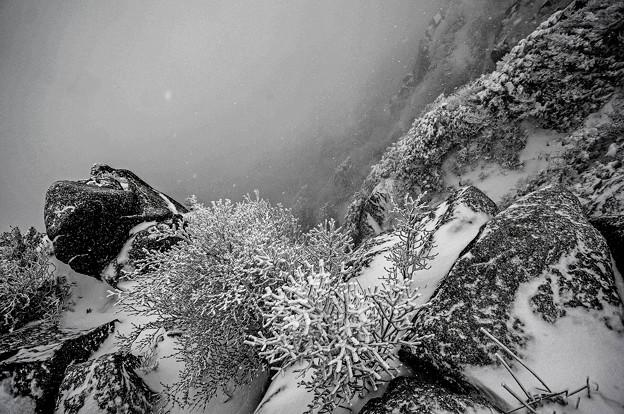 吹雪き氷壁の草氷