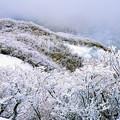 Photos: 氷点下の樹氷