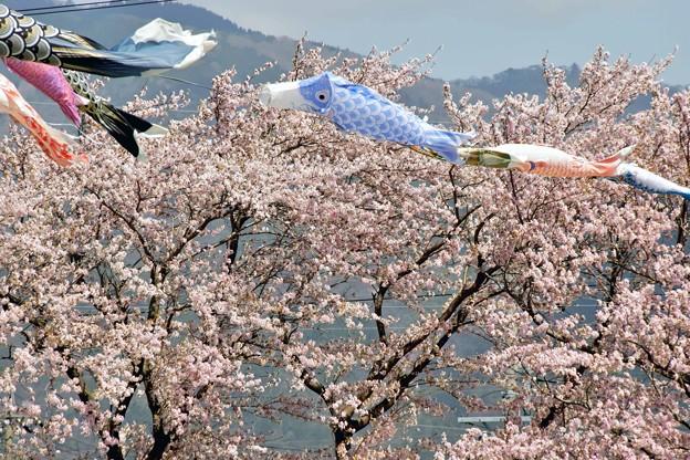 春の風-3