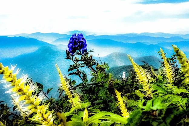 伊吹山の花めぐり-1
