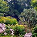 伊吹山の花々-3