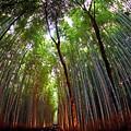 Photos: 秋の京都嵐山の散歩-1