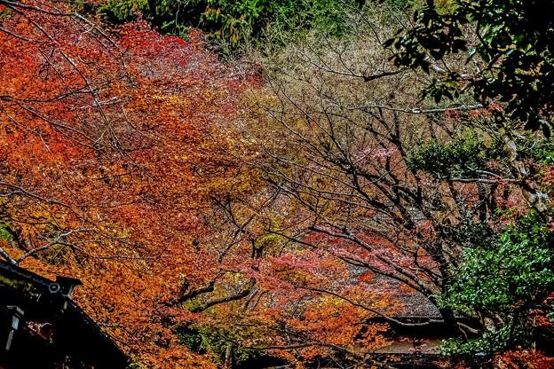 秋の京都嵐山の散歩-3