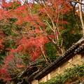 秋京都の1