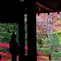Photos: 秋京都の2