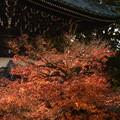Photos: 秋京都の3