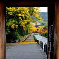 Photos: 京都の秋-2