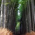 Photos: 京都の秋