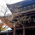 コロナ過の京都の秋-1