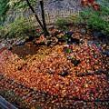 Photos: コロナ過の京都の秋-3