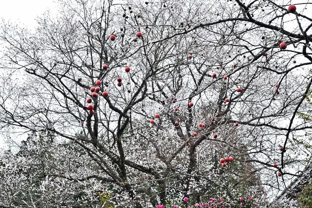 四季桜の12月-2