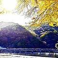 Photos: 京都嵐山-2