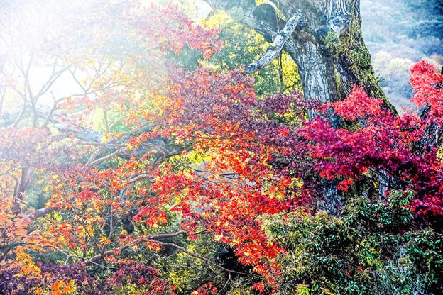 Photos: 京都嵐山-3