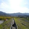 Photos: 墨男