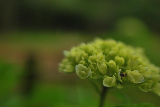 ナミテントウの幼虫観察日記1