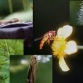 カナヘビ蜘蛛アゲハセセリハナアブ