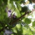 写真: 藤の高根に降る雨も