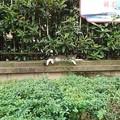 Photos: ホワイトソックスとらちゃん