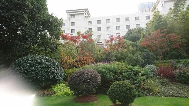 上海の紅葉