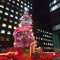 写真: 青山クリスマスツリー