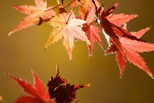 さっぱりな紅葉
