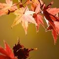 写真: さっぱりな紅葉
