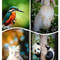 Photos: collage-1546761698351