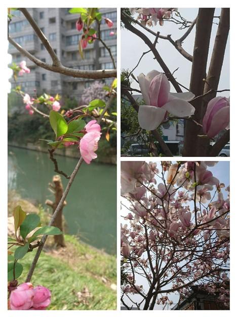 Photos: collage-1553416270049