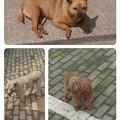Photos: collage-1553572955741