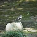 Photos: 四季鳥かな