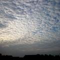 Photos: 鱗雲かな