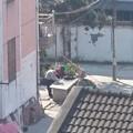 Photos: 外で水仕事をする老夫婦
