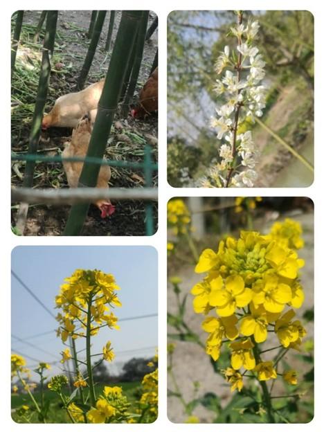 Photos: 平湖の春