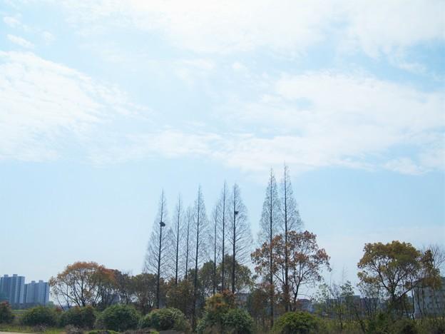 鳥の巣のある木