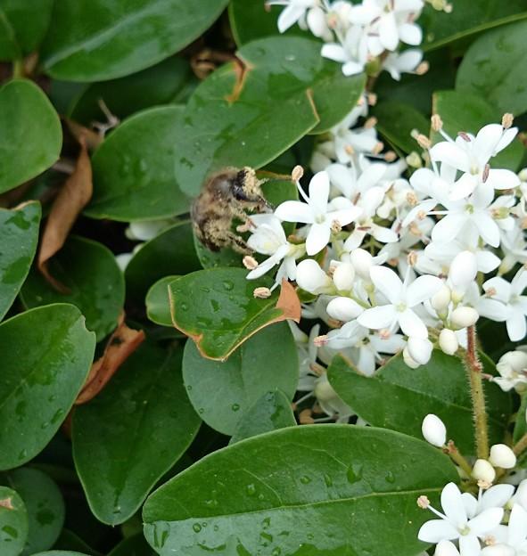 花粉まみれのハッチ